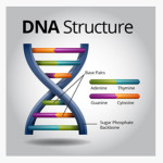 DNA structure image